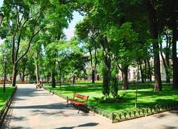 Самые благоустроенные районы Петербурга
