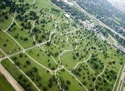 Строительство города-спутника «Южный» не повредит лесу